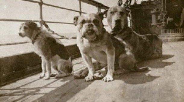 Pasajeros del Titanic #6: Ann Elisabeth Isham y las mascotas del Titanic